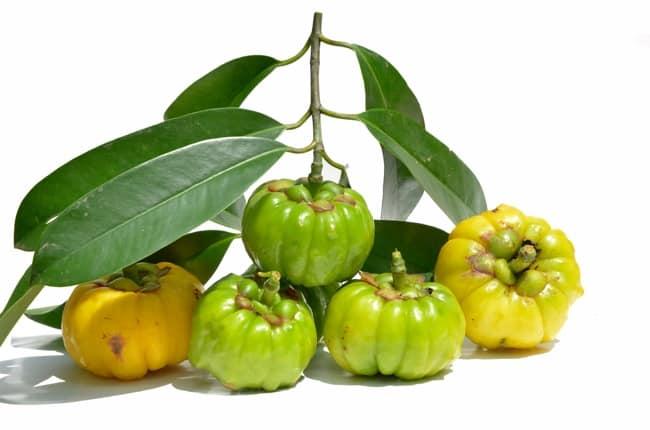 Trái cây có chứa Garcinia Cambogia