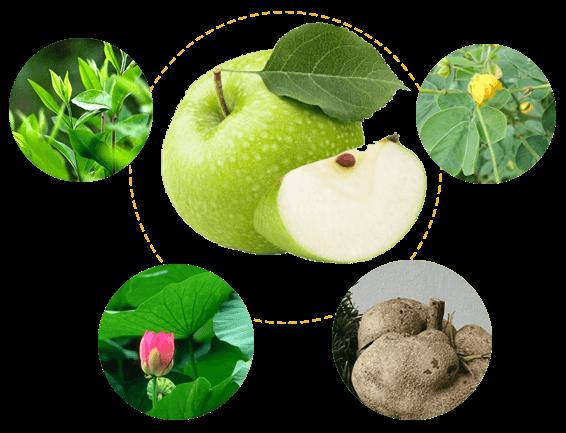 thành phần chính của viên giảm béo hoa bảo
